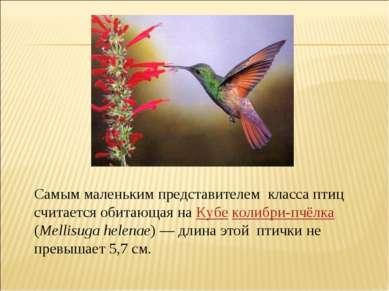 Самым маленьким представителем класса птиц считается обитающая на Кубе колибр...