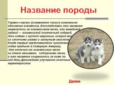Термин «хаски» (искаженное «эски») изначально обозначал эскимосов. Впоследств...