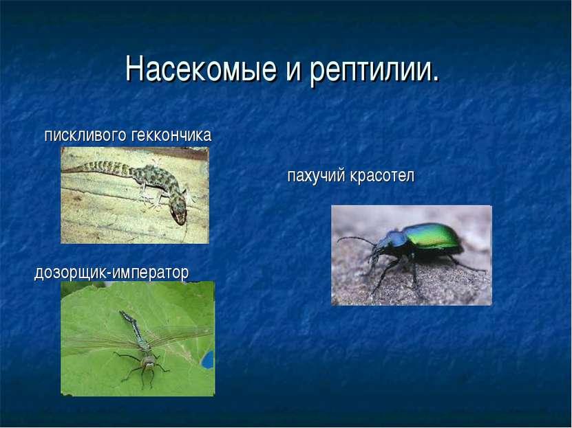 Насекомые и рептилии. пискливого геккончика дозорщик-император пахучий красотел