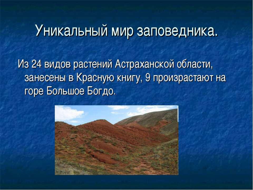 Уникальный мир заповедника. Из 24 видов растений Астраханской области, занесе...
