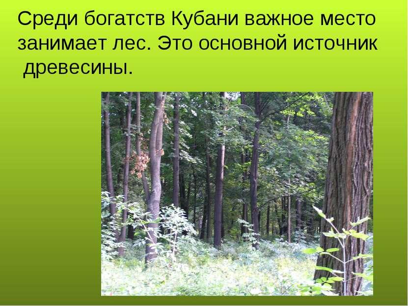 Среди богатств Кубани важное место занимает лес. Это основной источник древес...