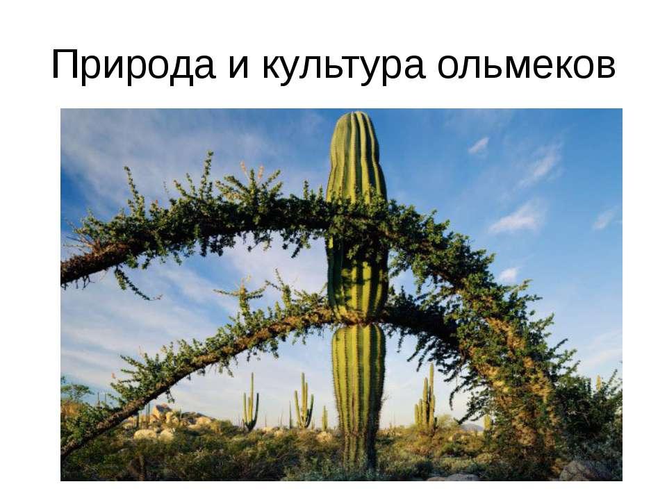 Природа и культура ольмеков