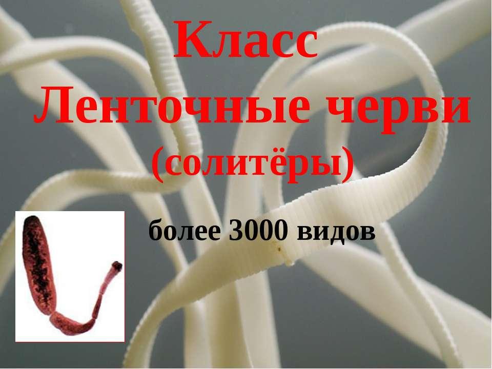 Класс Ленточные черви (солитёры) более 3000 видов
