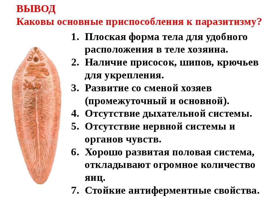 ВЫВОД Каковы основные приспособления к паразитизму? Плоская форма тела для уд...
