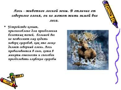 Лось - животное лесной зоны. В отличие от северного оленя, он не может жить з...