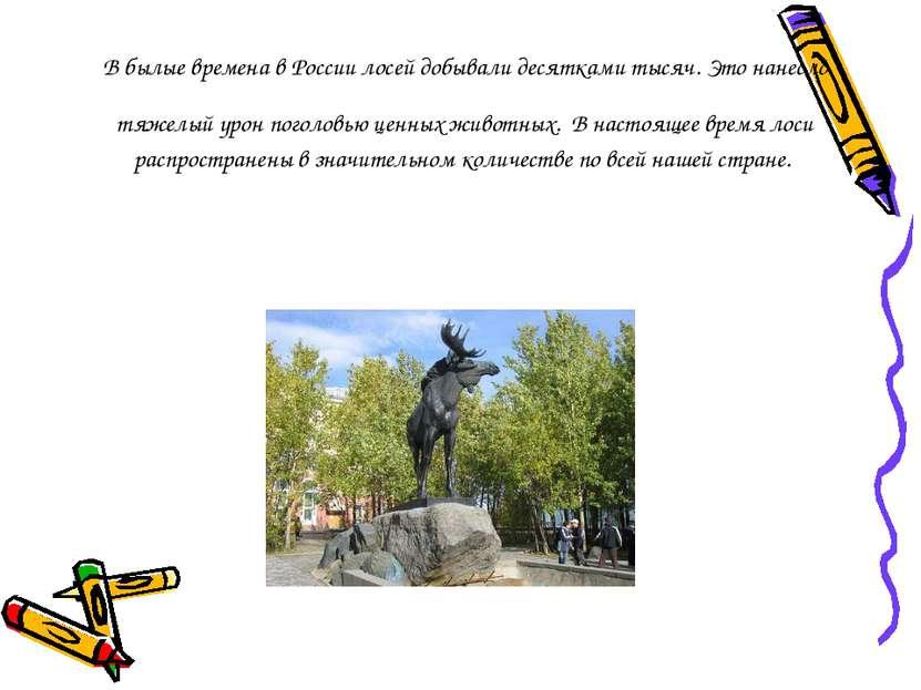 В былые времена в России лосей добывали десятками тысяч. Это нанесло тяжелый ...
