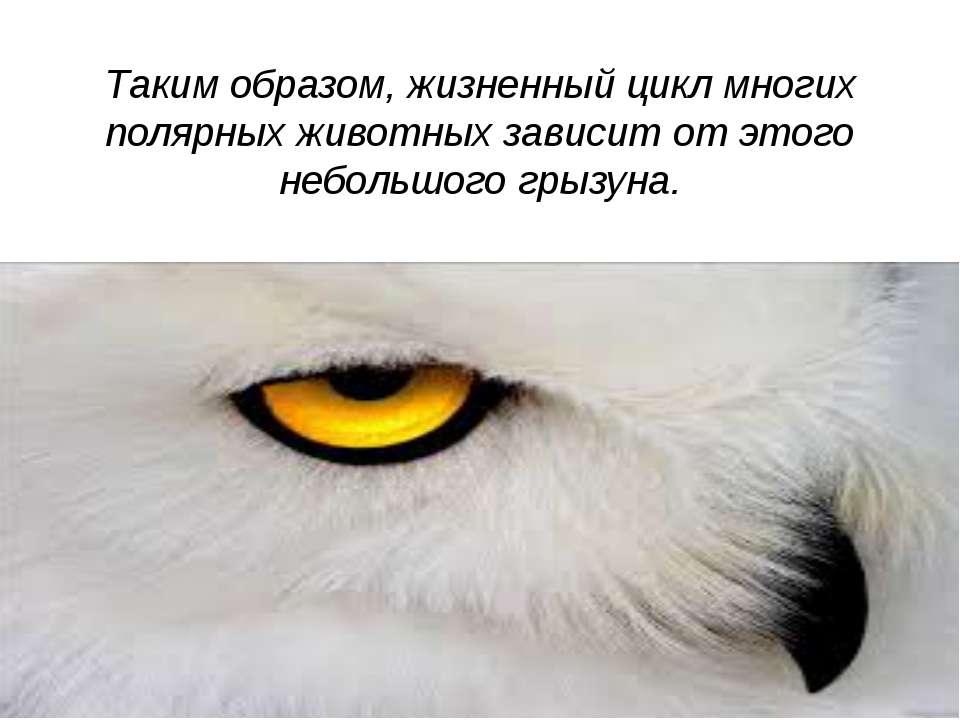 Таким образом, жизненный цикл многих полярных животных зависит от этого небол...