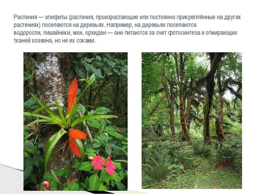 Растения —эпифиты(растения, произрастающие или постоянно прикреплённые на д...