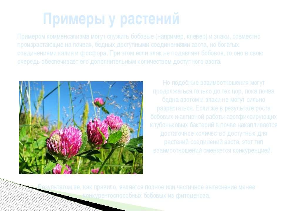 Примеры у растений Примером комменсализма могут служитьбобовые(например,кл...