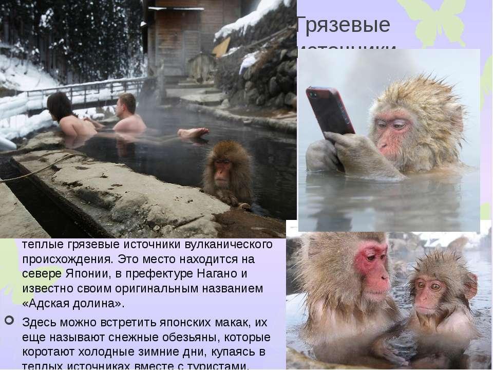 Грязевые источники Дзигокудани – знаменитые на весь мир теплые грязевые источ...