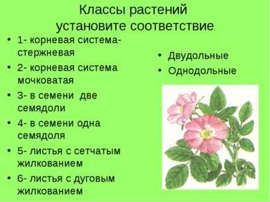 Классы растений установите соответствие 1- корневая система- стержневая 2- ко...