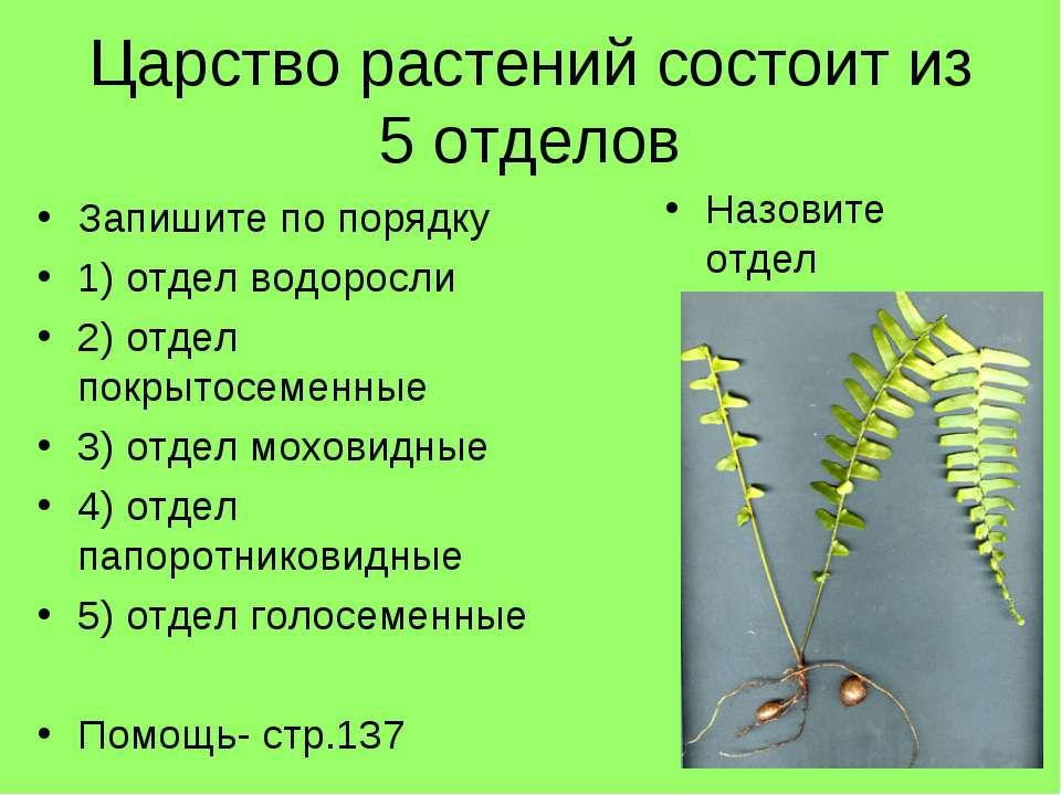 Царство растений состоит из 5 отделов Запишите по порядку 1) отдел водоросли ...