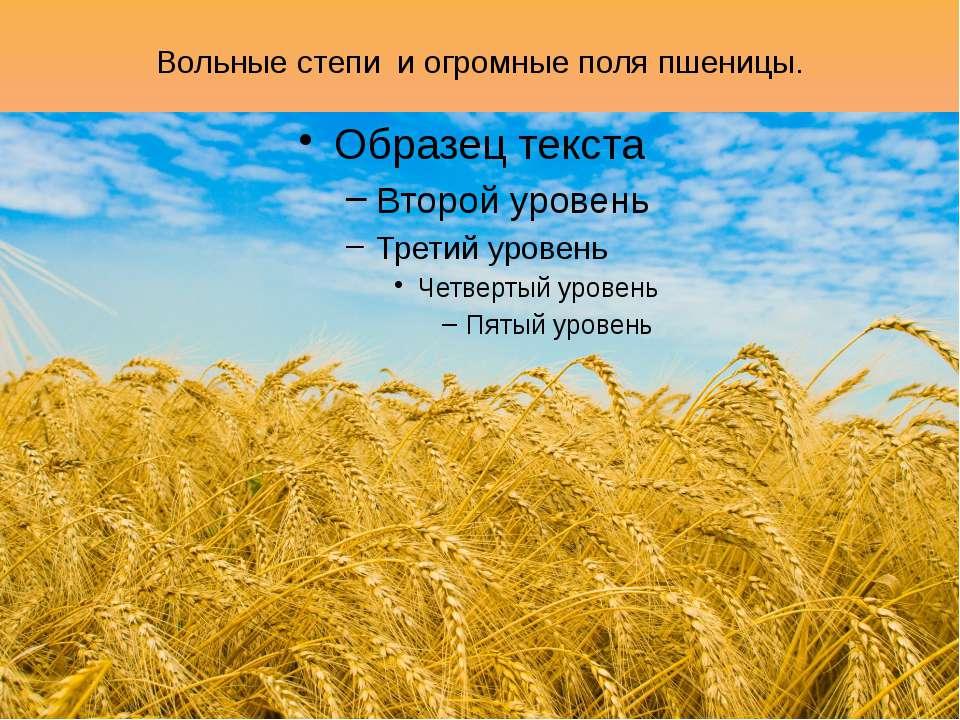 Вольные степи и огромные поля пшеницы.