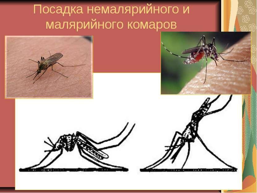 Посадка немалярийного и малярийного комаров