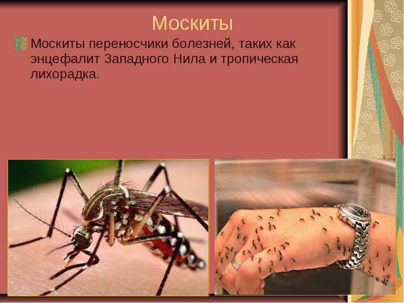 Москиты Москиты переносчики болезней, таких как энцефалит Западного Нила и тр...
