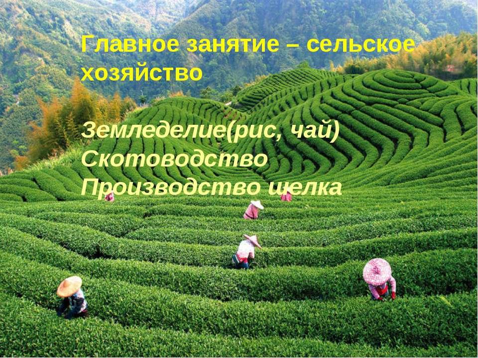 Главное занятие – сельское хозяйство Земледелие(рис, чай) Скотоводство Произв...