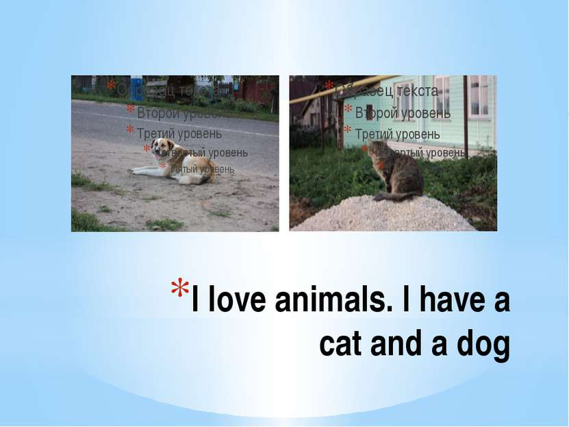 I love animals. I have a cat and a dog