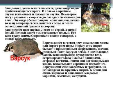 Заяц Заяц может долго лежать на месте, даже когда видит приближающегося врага...