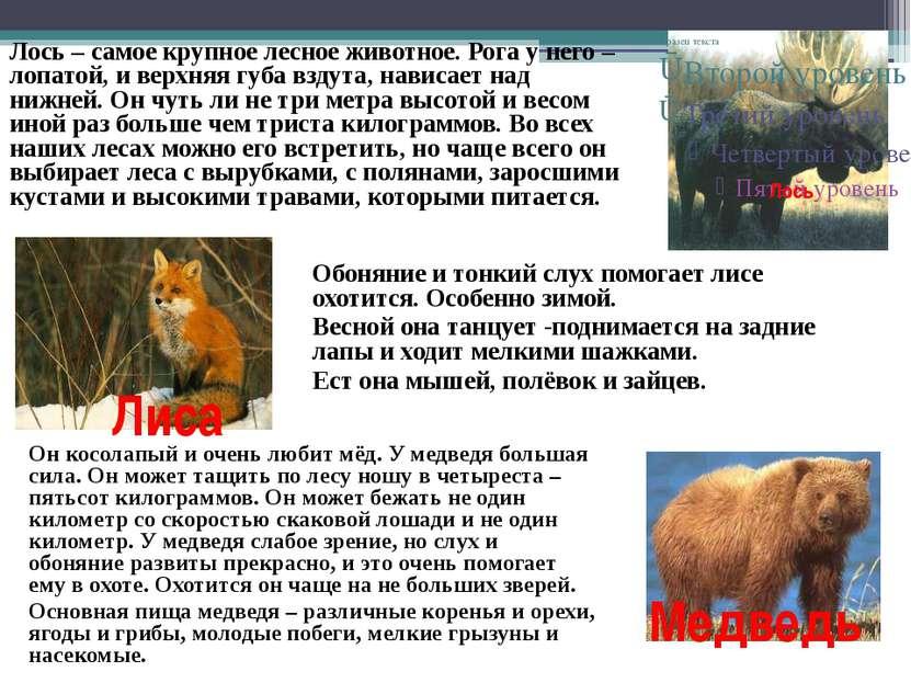 Лось Лось – самое крупное лесное животное. Рога у него – лопатой, и верхняя г...