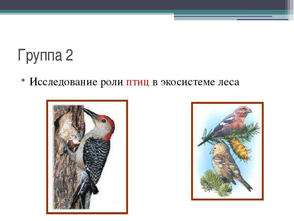 Группа 2 Исследование роли птиц в экосистеме леса