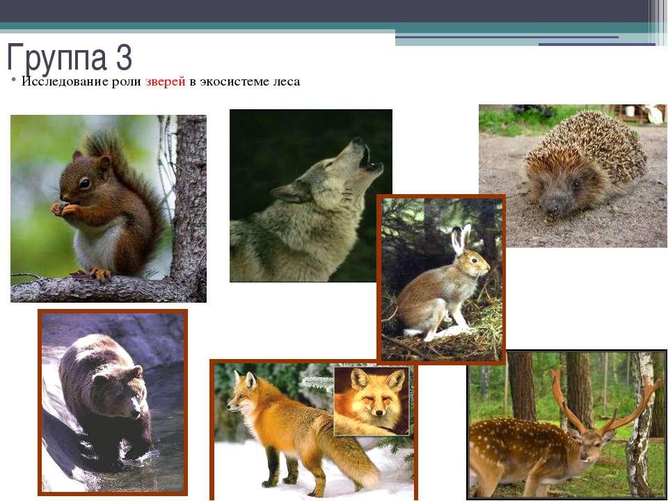 Группа 3 Исследование роли зверей в экосистеме леса