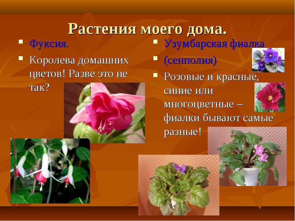 Растения моего дома. Фуксия. Королева домашних цветов! Разве это не так? Узум...