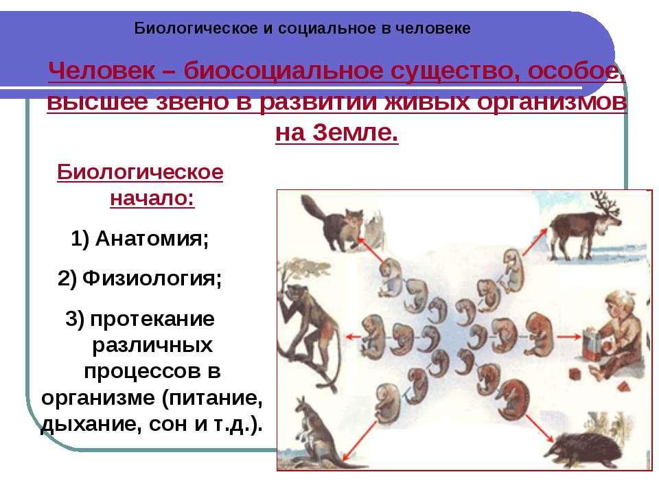 Биологическое и социальное в человеке Человек – биосоциальное существо, особо...
