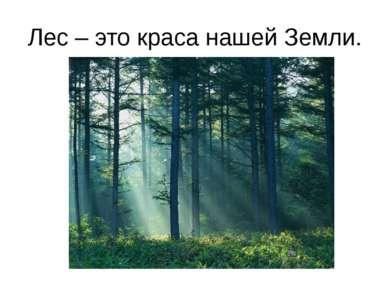 Лес – это краса нашей Земли.