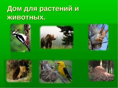 Дом для растений и животных.