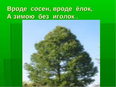 Вроде сосен, вроде ёлок, А зимою без иголок .