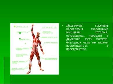 Мышечная система образована скелетными мышцами, которые, сокращаясь, приводят...