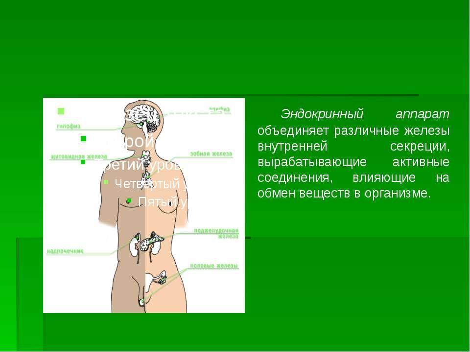 Эндокринный аппарат объединяет различные железы внутренней секреции, вырабаты...