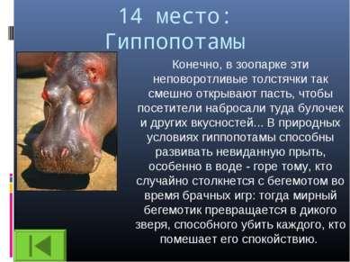 14 место: Гиппопотамы Конечно, в зоопарке эти неповоротливые толстячки так см...