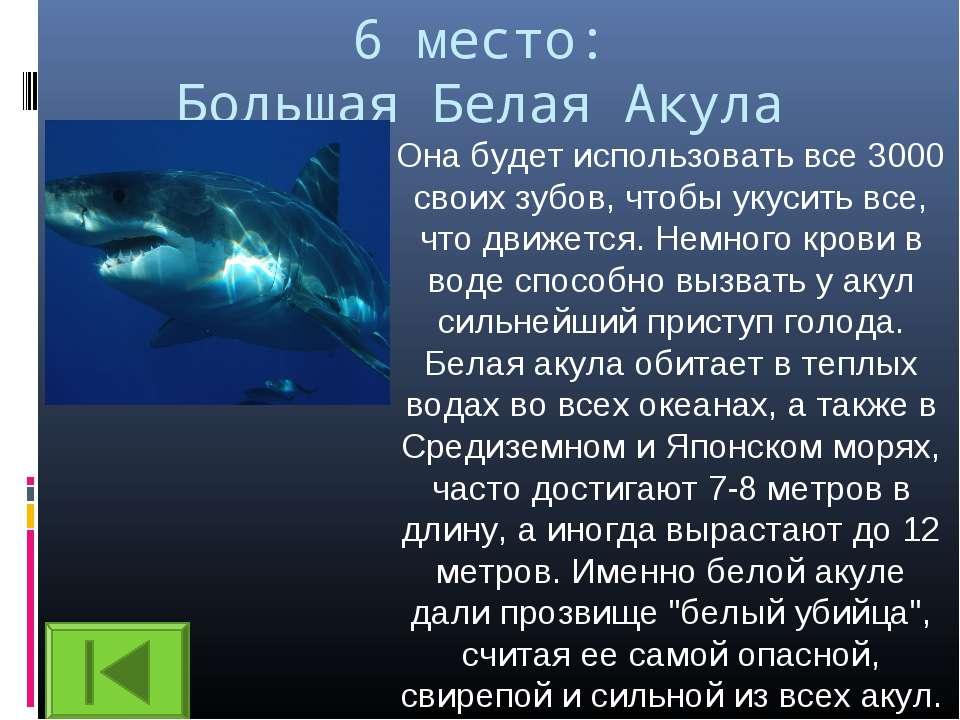 6 место: Большая Белая Акула Она будет использовать все 3000 своих зубов, что...