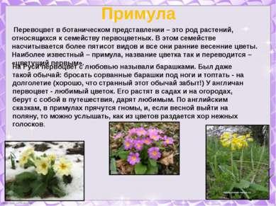 Примула Перевоцвет в ботаническом представлении – это род растений, относящих...