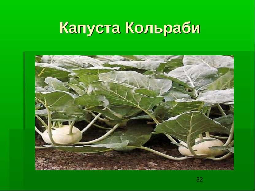 Капуста Кольраби