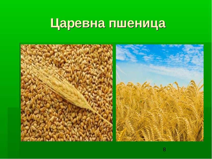 Царевна пшеница