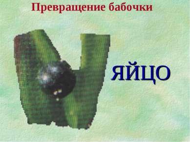 Превращение бабочки ЯЙЦО