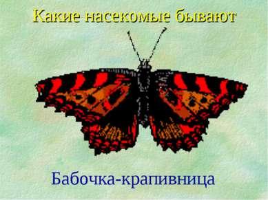 Какие насекомые бывают Бабочка-крапивница