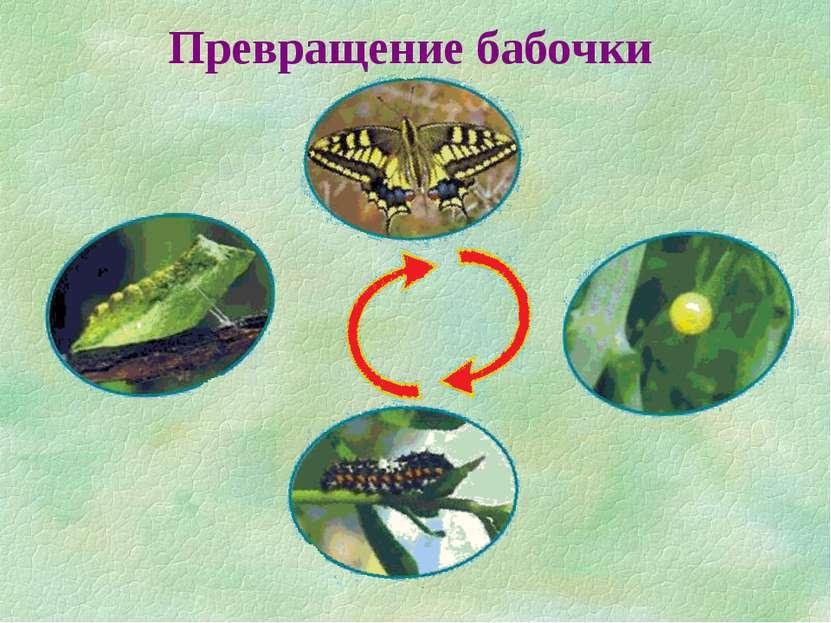 Превращение бабочки