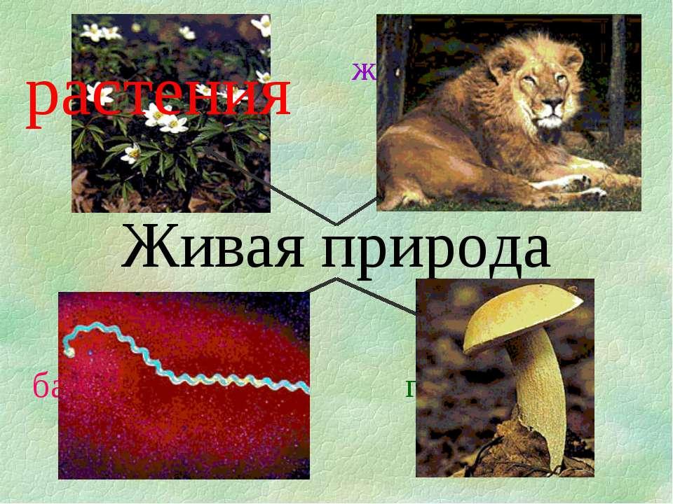Живая природа растения животные бактерии грибы