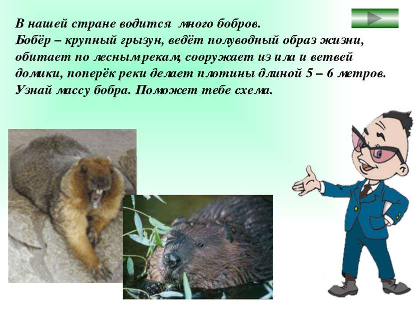 В нашей стране водится много бобров. Бобёр – крупный грызун, ведёт полуводный...