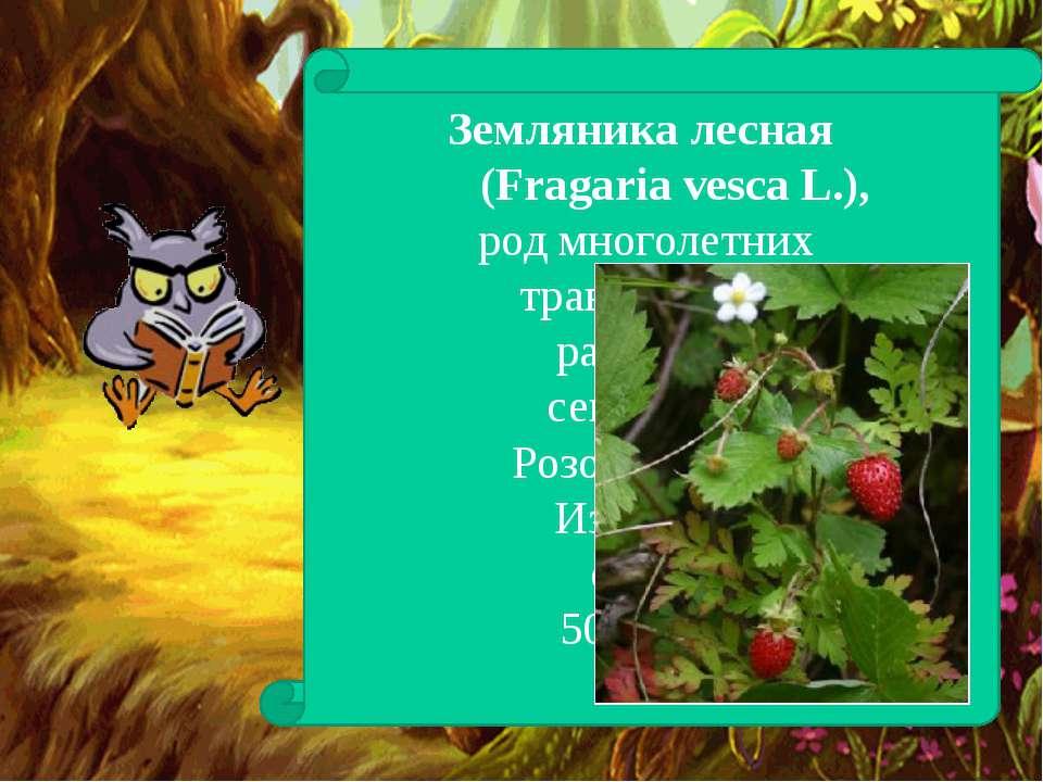 Земляника лесная (Fragaria vesca L.), род многолетних травянистых растений се...