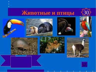 Животные и птицы Тукан, ревун кондор, ара, лама броненосец, ленивец 30