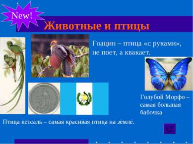 Животные и птицы New! Птица кетсаль – самая красивая птица на земле. Гоацин –...