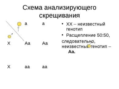 Схема анализирующего скрещивания ХХ – неизвестный генотип Расщепление 50:50, ...