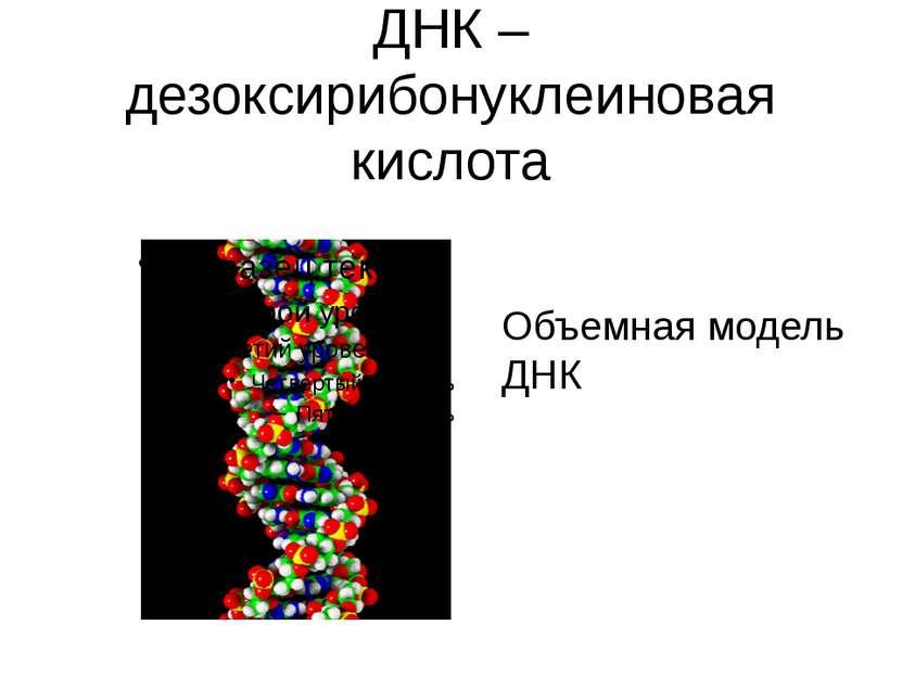 ДНК – дезоксирибонуклеиновая кислота Объемная модель ДНК