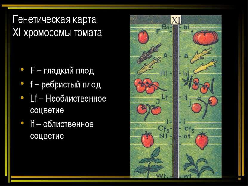 Генетическая карта ХI хромосомы томата F – гладкий плод f – ребристый плод Lf...
