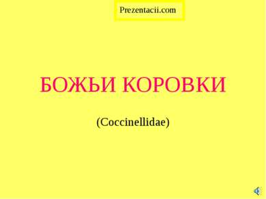 БОЖЬИ КОРОВКИ (Coccinellidae)