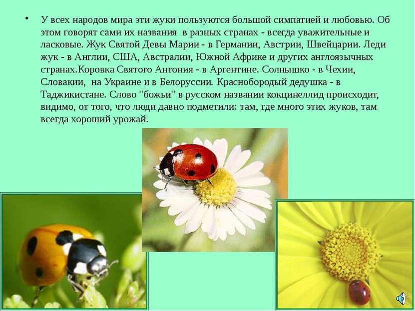 У всех народов мира эти жуки пользуются большой симпатией и любовью. Об этом ...